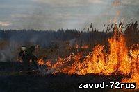 В Тюменской области к административной ответственности за сжигание сухой травы уже привлечены более 40 человек