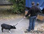 В Заводоуковске будут отлавливать бродячих собак
