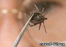 В Тюмени зафиксированы первые укусы клещей