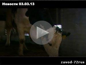 Наше Время. новости Заводоуковска